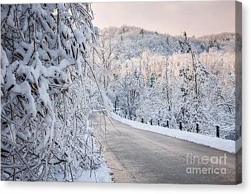 Scenic Road In Winter Forest Canvas Print by Elena Elisseeva