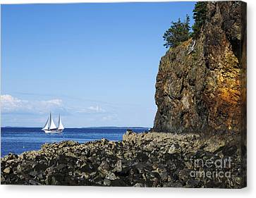 Schooner Sailing In The Bay Canvas Print by Diane Diederich