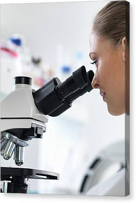 Scientist Using Microscope Canvas Print by Tek Image