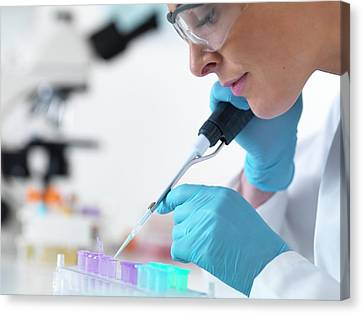 Scientist Using Pipette Canvas Print by Tek Image