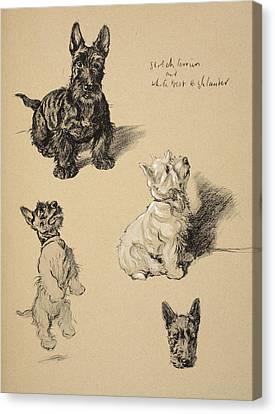 Scotch Terrier And White Westie Canvas Print by Cecil Charles Windsor Aldin