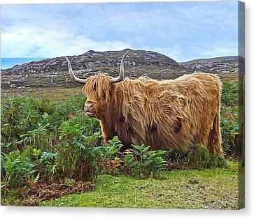 Scottish Highland Cow Canvas Print by Gill Billington