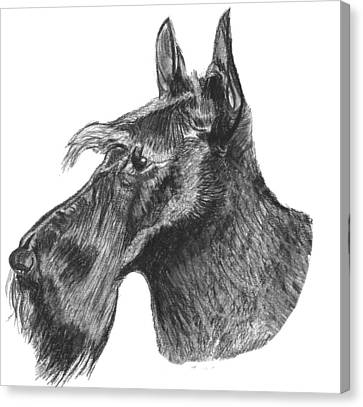 Scottish Terrier Dog Canvas Print by Catherine Roberts