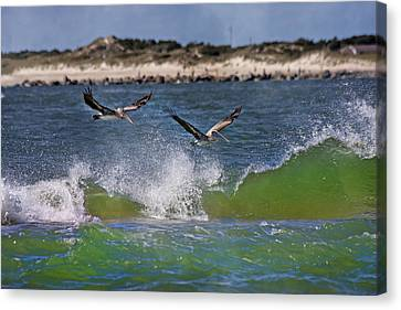 Scouting For A Catch Canvas Print by Betsy Knapp