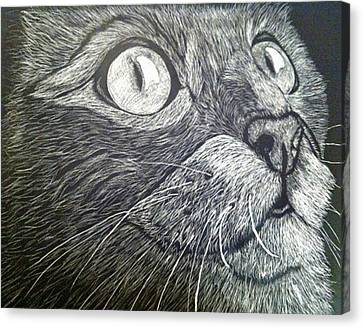 Scratch Art Kitty Cat Canvas Print by Brenda Brown