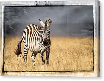 Scratched Tin Zebra Canvas Print by Mike Gaudaur