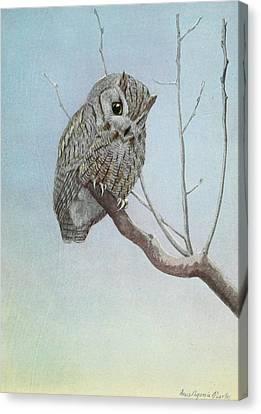 Screech Owl Canvas Print by Louis Agassiz Fuertes