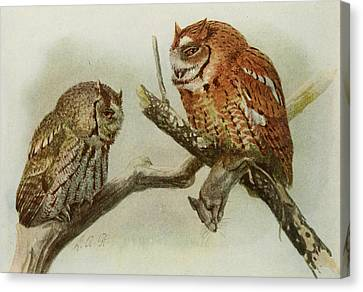Screech Owls Canvas Print by Louis Agassiz Fuertes