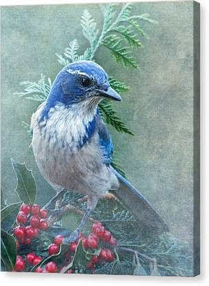 Scrub Jay Christmas Canvas Print by Angie Vogel