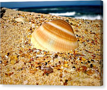 Sea Beyond The Shell Canvas Print by Kaye Menner