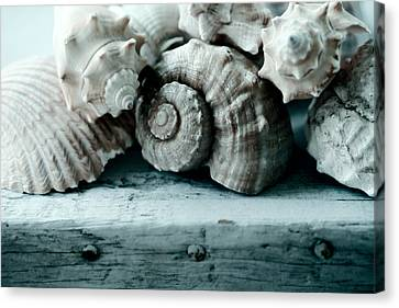 Sea Gifts Canvas Print by Bonnie Bruno