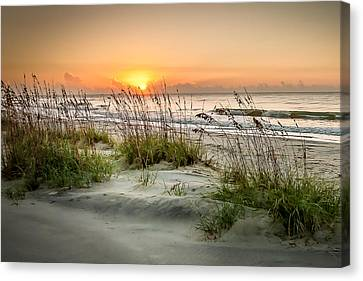 Sea Oat Islands Canvas Print by Steve DuPree