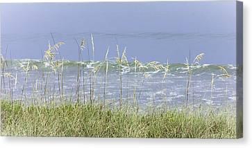 Sea Oats Panorama 1 Canvas Print by Karen Stephenson