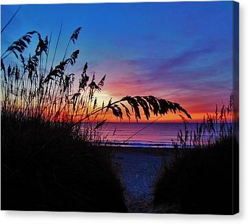 Sea Oats Sunrise Canvas Print by Mark Lemmon