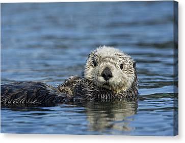 Sea Otter Alaska Canvas Print by Michael Quinton