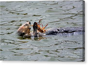 Sea Otter Munching On Crab Leg Canvas Print by Susan Wiedmann