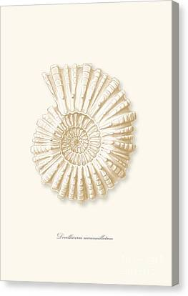 Sea Shell White French Vintage Canvas Print by Patruschka Hetterschij