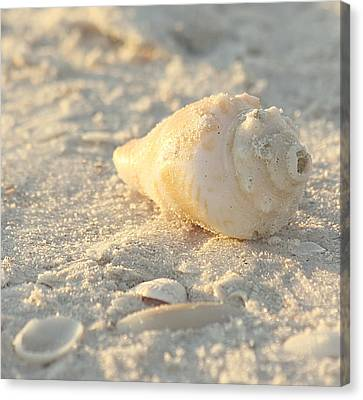 Sea Shells Canvas Print by Kim Hojnacki
