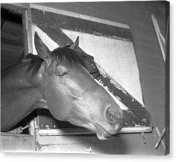 Seabiscuit Triple Crown Winner #9 Canvas Print by Retro Images Archive