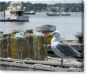 Seagull At Rest On Lobster Box  - Digital Art  Canvas Print by Anthony Morretta