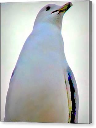 Seagull Close Up View Canvas Print by Danielle  Parent