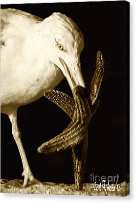 Dancing Seagull And Starfish Canvas Print by Carol F Austin