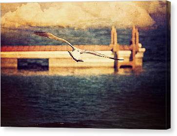Seagull Flying Canvas Print by Maria Angelica Maira