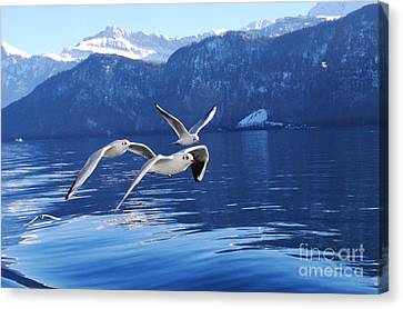 Seagull Formation Canvas Print by Rowan Russell