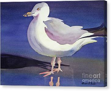 Seagull Canvas Print by Shirin Shahram Badie