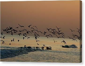 Seagulls Feeding At Dusk Canvas Print by Beth Andersen