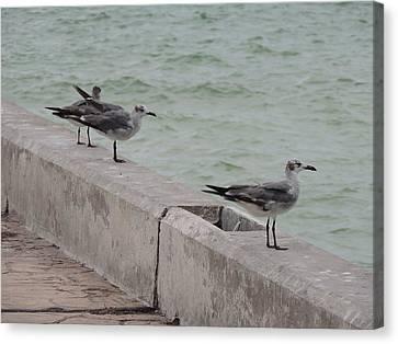 Seagulls In Progreso Canvas Print by Malu Lipsitz