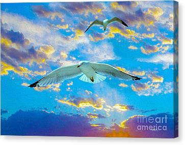 Seagulls  Canvas Print by Jon Neidert