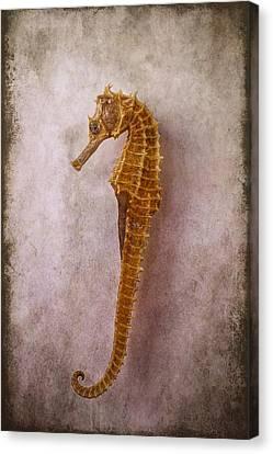 Seahorse Still Life Canvas Print by Garry Gay