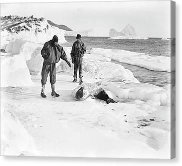 Seal Research In Antarctica Canvas Print by Scott Polar Research Institute