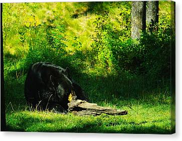 Searching For That Last Termite Canvas Print by Jeff Swan