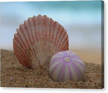 Seashell And Sea Urchin 2  Canvas Print by Cathy Lindsey