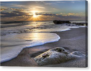 Seashell Canvas Print by Debra and Dave Vanderlaan