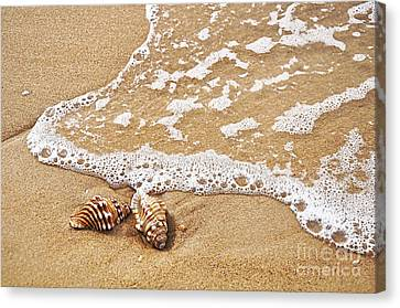 Seashells And Lace Canvas Print by Kaye Menner