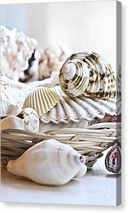 Seashells Canvas Print by Elena Elisseeva