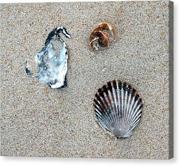 Seashells On The Beach Canvas Print by Kim Bemis