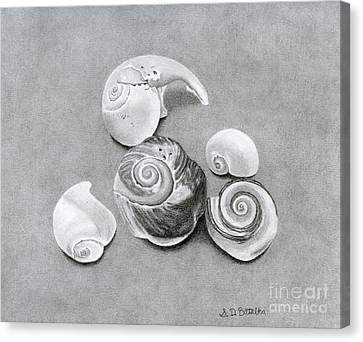 Seashells Canvas Print by Sarah Batalka