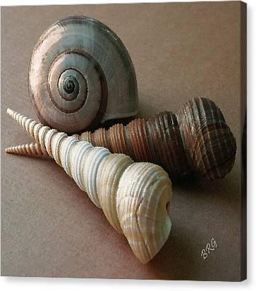 Seashells Spectacular No 29  Canvas Print by Ben and Raisa Gertsberg