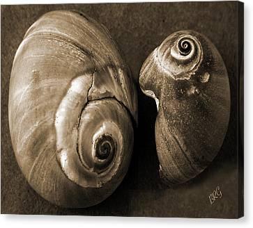 Seashells Spectacular No 6 Canvas Print by Ben and Raisa Gertsberg