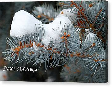 Season's Greetings Canvas Print by Donna Kennedy