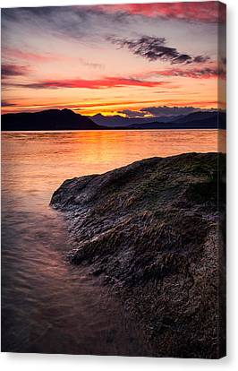 Seaweed Sunset Canvas Print by Alexis Birkill
