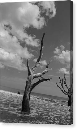 Second Glance Canvas Print by Steven  Taylor