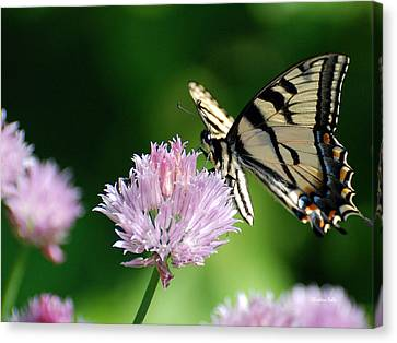 Second Nature Butterfly Canvas Print by Christina Rollo