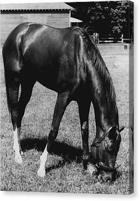 Secretariat Vintage Horse Racing #03 Canvas Print by Retro Images Archive