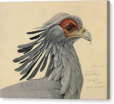 Secretary Bird Canvas Print by Louis Agassiz Fuertes