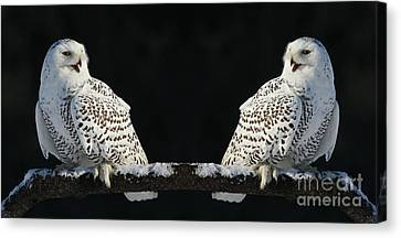 Seeing Double- Snowy Owl At Twilight Canvas Print by Inspired Nature Photography Fine Art Photography